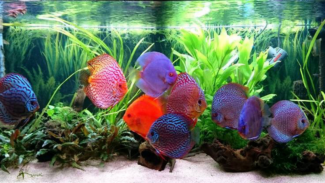 Mid Atlantic Aquarium Services We Are A Chesapeake City Fish Tank Maintenance Co Here For All Your Aquarium Services So If Your Fish Tank Needs Cleaning Give Us A Call