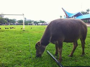 Photo: Domingo 22 de marzo de 2015 Campo de fútbol.  Rantepao (Tana Toraja, Sulawesi)