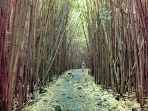 Photo: Next day, new hike. This time through the bamboo forest to Waimoku falls