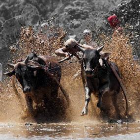 gigiak ikua tu........... by Taufik T KamaMoto - Sports & Fitness Rodeo/Bull Riding
