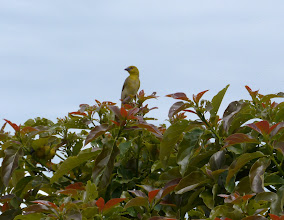Photo: The garden is kept well and attacts many birds.  I also saw an Ibis.