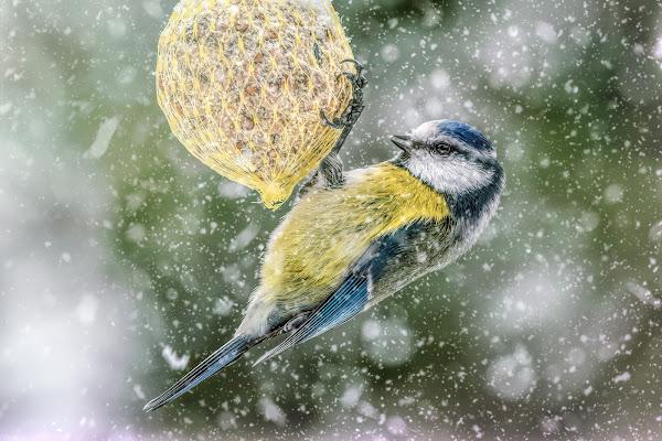 Winter is here di Sara Jazbar