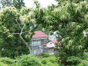 Photo: 裏山から見た温泉宿。