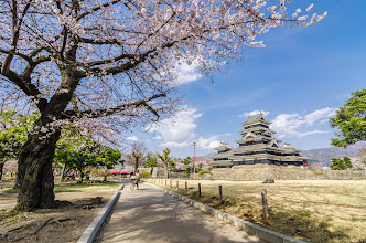 Photo: Cherry Blossoms approaching full bloom around Matsumoto Castle, Japan