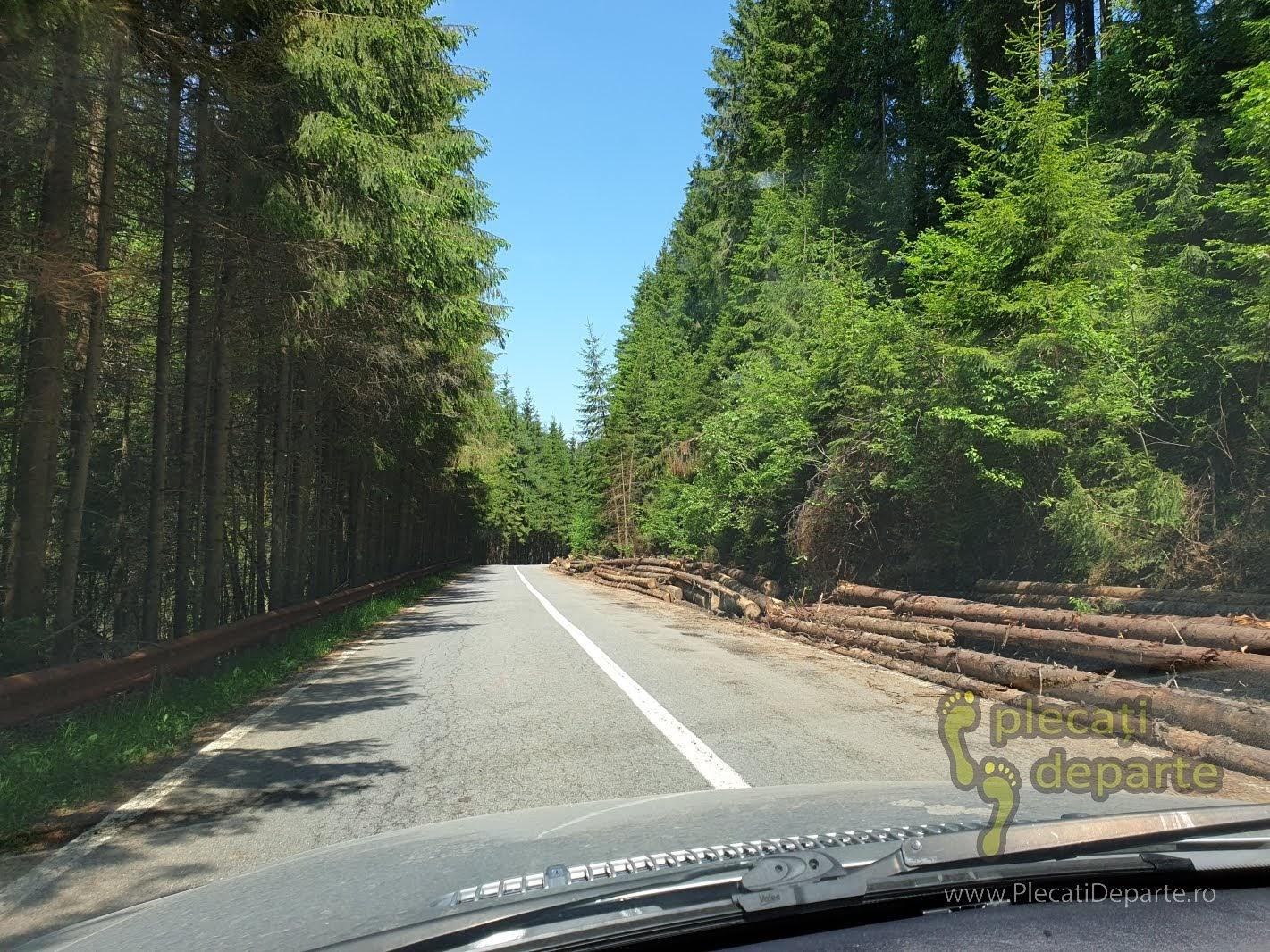 muntii apuseni tara motilor transursoaia trans-ursoaia dn 1R dn1R lacul belis taieri paduri defrisari lemn romanesc copaci taiati despadurire fond forestier