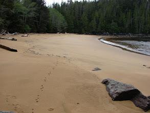 Photo: Cat tracks on Red Sand beach.