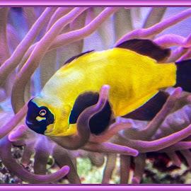 Fish by Dawn Hoehn Hagler - Digital Art Animals ( arizona, fish, litchfield park, photoshop, zoo, oil paint, wildlife world zoo, aquarium, digital art )