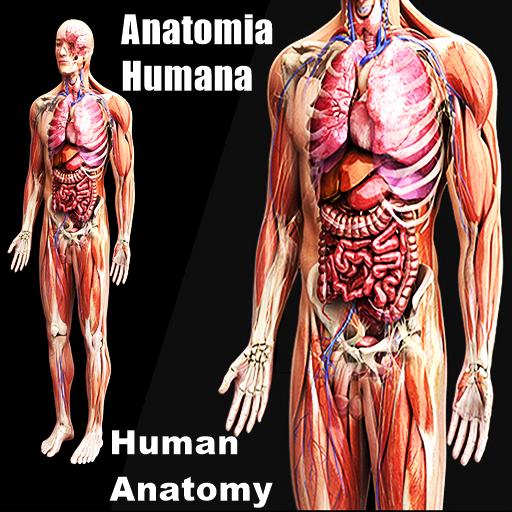 Baixar Anatomia humana Estude o corpo humano em 3D para Android