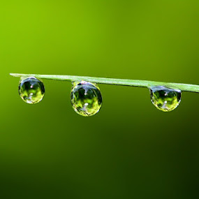 morning dews by Edwin Yepese - Abstract Water Drops & Splashes ( macro, backgrounds, nature up close, waterdroops )