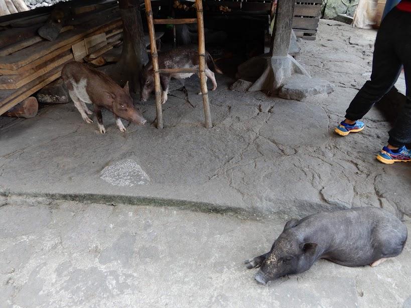 フィリピンの伝統的な家は一階部分。
