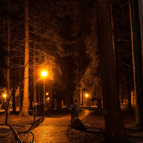 night in the park by Sorin Tanase - City,  Street & Park  City Parks ( bench, park, night, town, city )