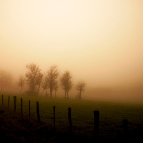 Something is coming... by Anne-Cecile Pflieger - Landscapes Prairies, Meadows & Fields ( sunlight, field, fence, stake, foggy, stakes, annececilegraphic, tree, fog, autumn, fall, meadow, trees, misty, mist,  )