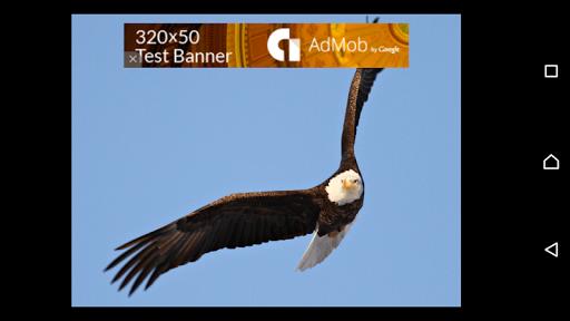 Eagle Says