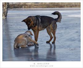 Photo: Buddy on ice Nr. 10