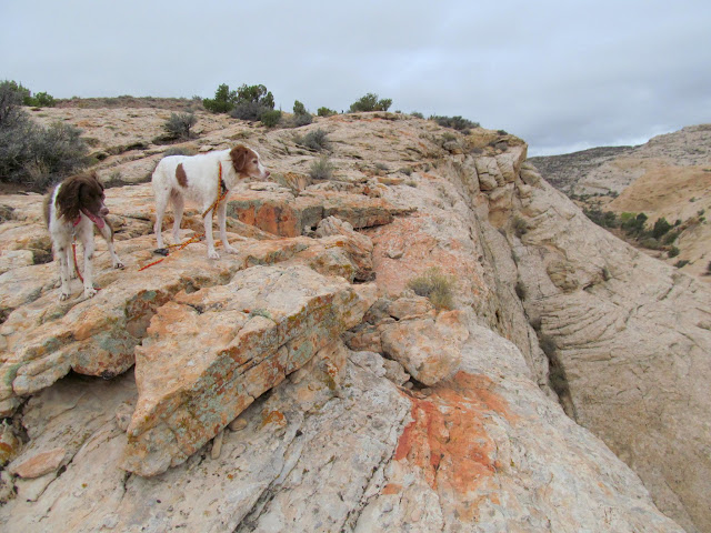 Boulder and Torrey in the San Rafael Reef