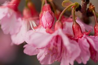 Photo: Sakura's Dance