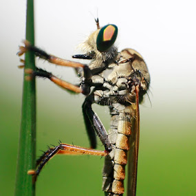 by Nizar Zulhilmi - Animals Insects & Spiders