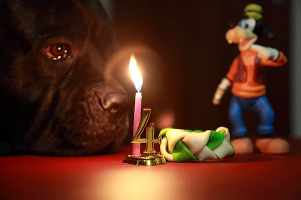 happy birthday di Cinzia_torelli