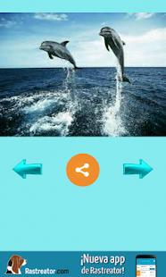Delfines - náhled