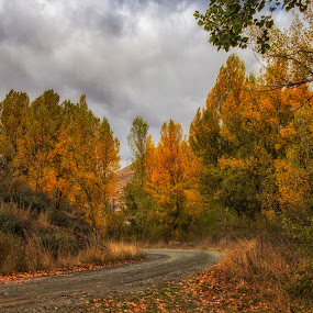 Sinfonía otoñal  by Daly Sda - Landscapes Forests ( leaves, autumn, trees, landscape,  )