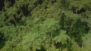 Tropical Rainforest thumbnail
