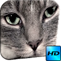 Real Puss Video Wallpaper icon