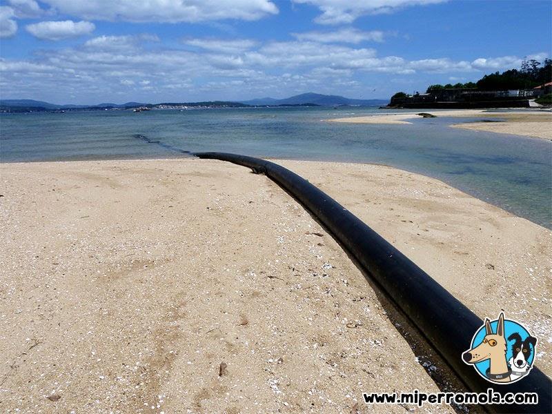 Playa para Perros en el Municipio de A Pobra Do Caramiñal, Can de Palleiro, Border Collie
