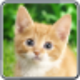 Cat's Sounds icon