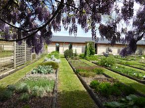 Photo: Conservatoire des plantes de Milly la forêt