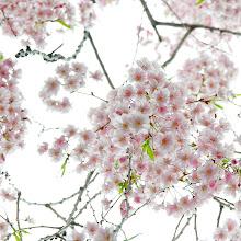 Photo: Bloom