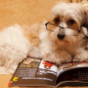 Reading by Ionut Stoica - Animals - Dogs Portraits ( set-up, dog, portrait )