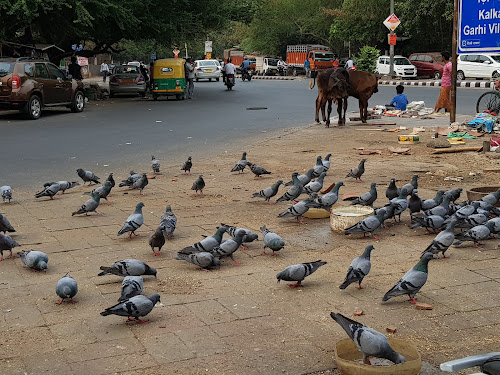 45 degree C in city. Birds drinking water  by Daisy Saini - Animals Birds