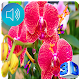 Orchid Live Wallpaper Download for PC Windows 10/8/7