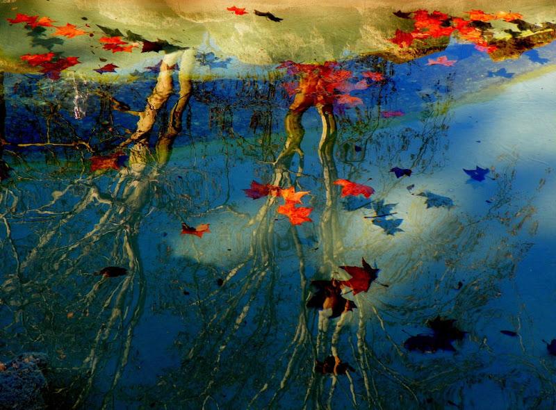 Riflessi d'autunno di mariateresacupani