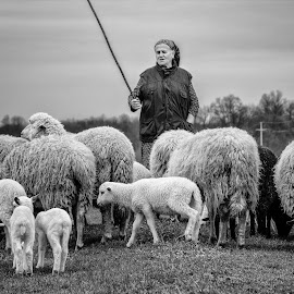 Shepherdess by Nenad Borojevic Foto - Black & White Portraits & People ( shepherdess, sheep,  )