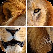 Tải Угадай животных по фрагментам miễn phí
