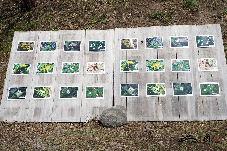 様々な原生花