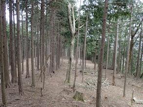 右から林道と合流