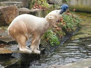 Photo: Knut holt kraeftig Schwung :-)