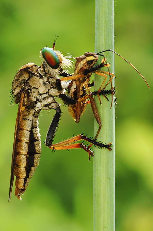 Breakfast by Fery Wahyudi - Animals Insects & Spiders
