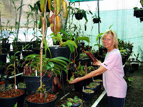 Photo: Diana and Nepenthes. Foto: R. Cantley.