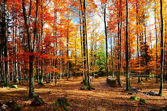 Photo: Colorful World
