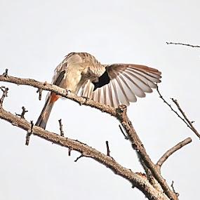 by Ilham  Eka prasetya - Animals Birds
