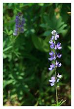Photo: Eastern Sierras-20120716-490