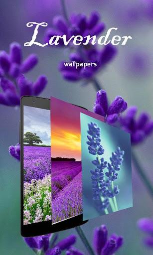 Beautiful Lavender Wallpapers