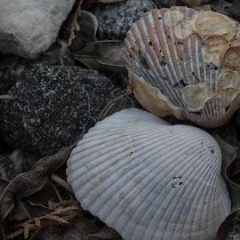 Rocks, Shells, and Leaves by Thomas Vasas - Abstract Patterns ( abstract, shells, nature, leaves, rocks )