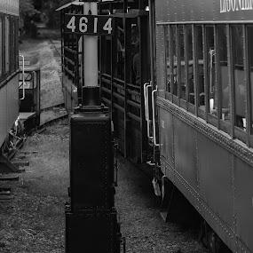 Hitting the track by Damon Hensley - Transportation Trains ( sign, passenger, locomotive, train, maryland, tracks, steam )