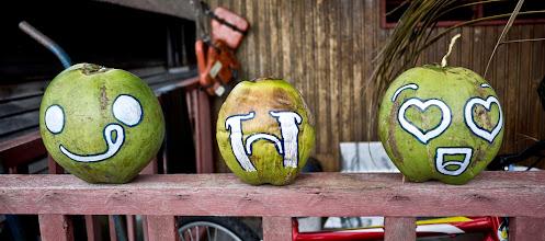 Photo: Noix de coco décoratives
