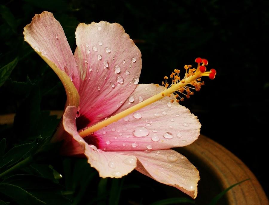 by Nain Ahmad - Nature Up Close Gardens & Produce