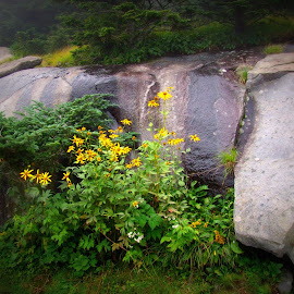 Flowers and rock by Rhonda Kay - Nature Up Close Rock & Stone